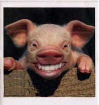 imagem-da-porco