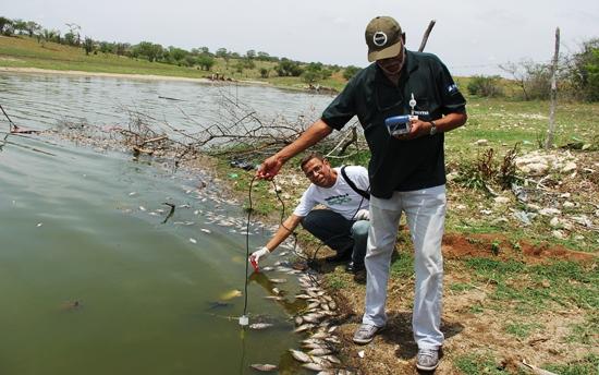 mortandade-de-peixes-em-coité.2