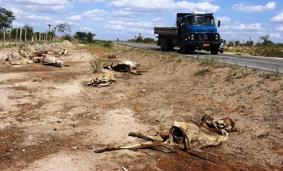 morte de animais em decorrencia da seca -2