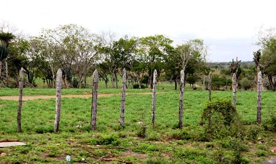 verde na região do sisal - foto-raimundo mascarenhas