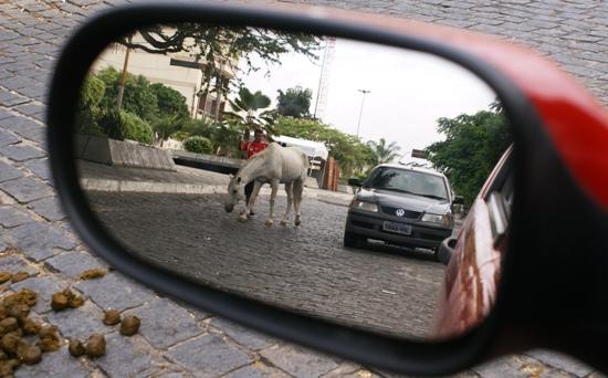 cavalo-comendo-grama-em-coite-3