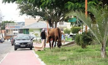 Jardim da Rua Padre Madureira 14h de quinta-feira,25/07. Governo Assis