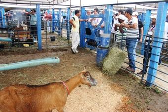inauguração do centro de comercialização de animais de São de São Domingos-9