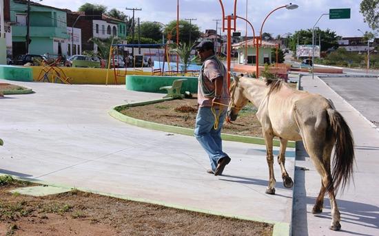Animal sendo retirado de Praça no Bairro Açudinho - Governo Assis /Março 2013