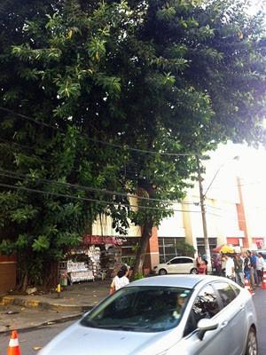 Árvore onde corpo foi encontrado em Salvador (Foto: Renata Menezes / TV Bahia)