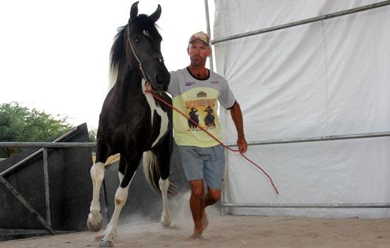 O tratador teve a missão de adaptar os animais a pista, que foi colocado areia sobre o madeirit.