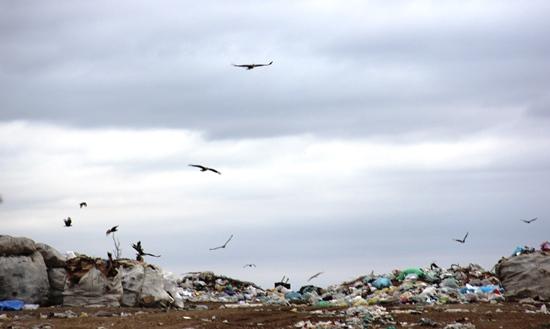 lixão de são domingos - 4- foto- Raimundo Mascarenhas