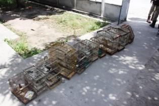 A casa de suspeito que tiver pássaro em gaiola será levado para delegacia, garante o delegado.