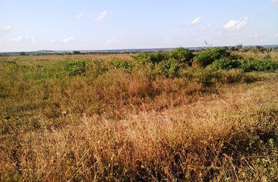 Situação atual do terreno onde será construído o Pólo. Foto:  Kaique Araújo.