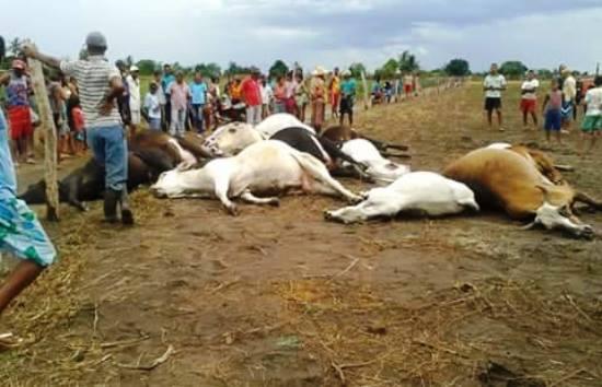 animais mortos pelo raio em mundo novo