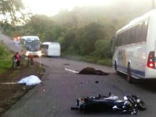 Motociclista e cavalo morreram depois de atropelamento na BR-110