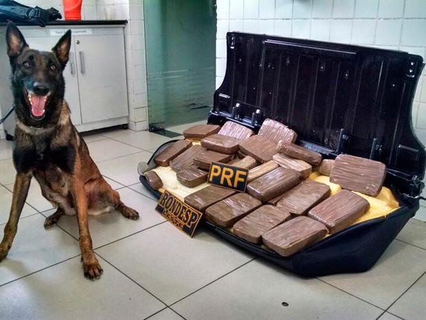 Cadela foi usada pela polícia para encontrar droga dentro de carro