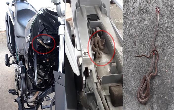 Cobra é encontrada debaixo de banco de moto em São Domingos